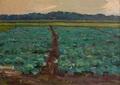 A plantation of cabbage by Vasiliy Strigin