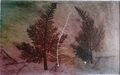 Fractal trees 8 Author's test 1 of 5 by Rosario de Mattos