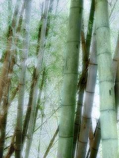 Serie Japan'10-11: Arashiyama I, Kyoto by Sonia A. Alzola