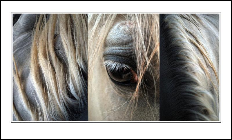 Horse by Brandan