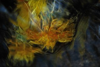 Comet in bloom by Brandan