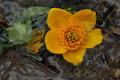 Yellow evanescent by Brandan