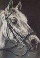 retrato de caballo nº 23 by Onésima Mercedes Petrone