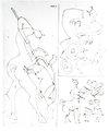 Les divers metiers du centaure: Picador, cheval de arriole, Maitre d'ecole by Pablo Picasso