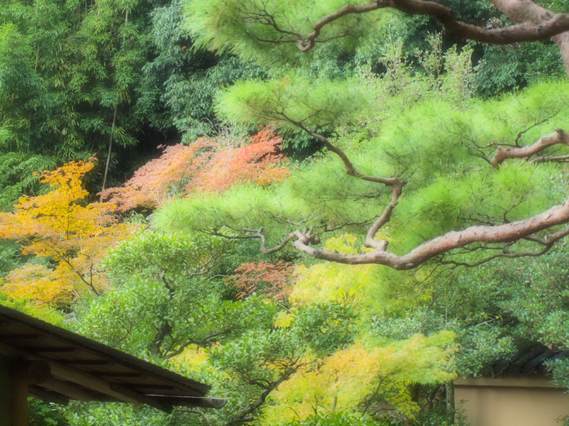 Serie Japan / Autumm'09: Kyoto no aki I by Sonia A. Alzola