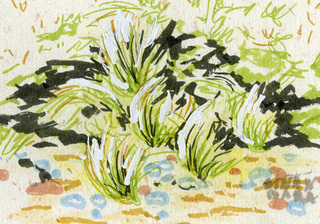 Beach Grass ACEO by Alexandra Cook