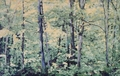 Forest by Leopoldo Fernández