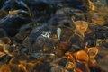 Mineral fusion by Brandan