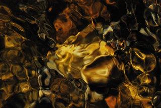 H. aureus by Brandan