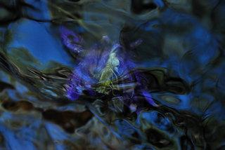 Violet spirit by Brandan