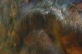 The caress of the brush II by Brandan