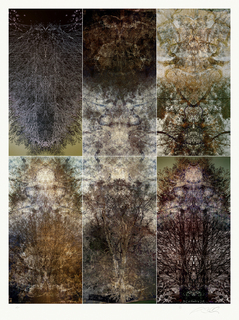 Study I / Huilquilemu Series by Alexander Sutulov