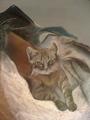 THE CAT by ART art