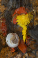 Snail by Brandan