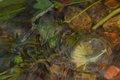 Faerie Sprites released by Brandan
