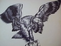 Eagle step 2 by PACHI
