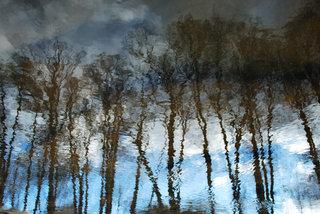 Trees at sunset by Brandan