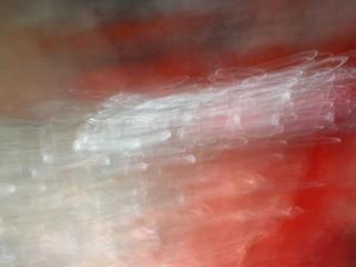 Series Titian. Part 338 by Oleg Frolov