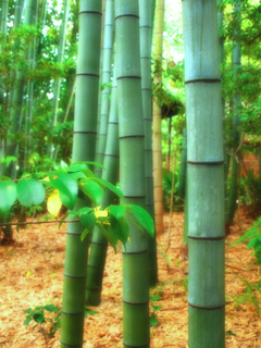 Serie Japan / Autumm'09: Arashiyama' bambues by Sonia A. Alzola