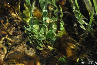 Green dancer by Brandan