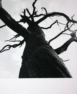 El roble muerto by Casimiro Martinferre