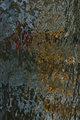 Mural II by Brandan
