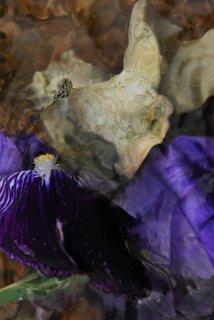 Ephemeral beauty II by Brandan