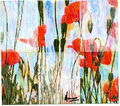 Poppies,3 rain rectangles by Marco Mark