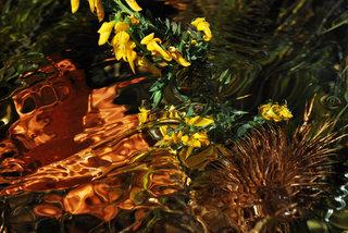 Flowers for Medea by Brandan