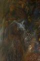 The caress of the brush III by Brandan