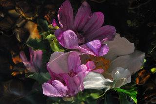 Spirit mauve pink II by Brandan