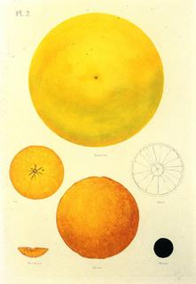 Orange by Donald Sultan