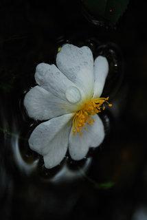 White Spirit by Brandan