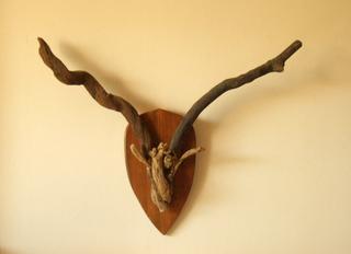 Hunting Trophy: Mountain Goat II by Pablo Daza