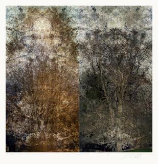 Roble Coihue I / Huilquilemu Series by Alexander Sutulov
