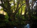 oak grove Frade by Francisco Sutil