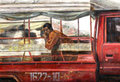 Along the Way by Therdkiat Wangwatcharakul