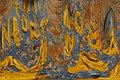 Palette - Ocre by Brandan