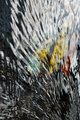 Plumage by Brandan