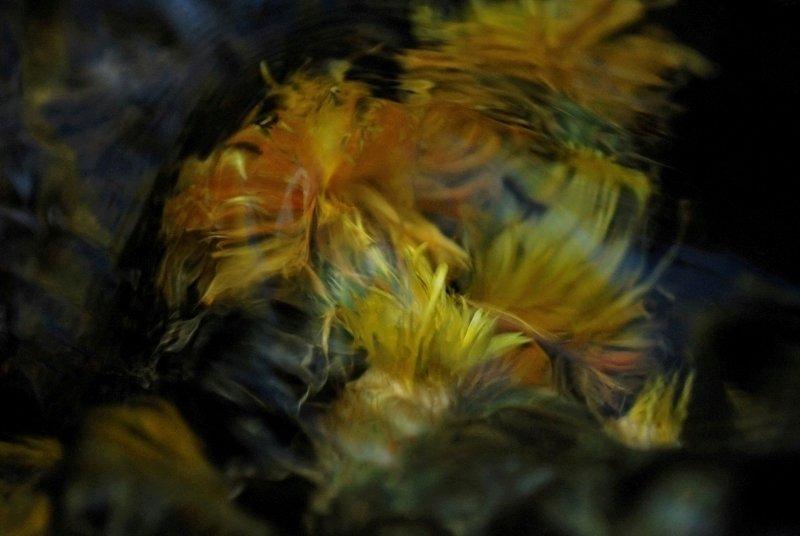 Yellow and Honey by Brandan