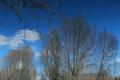 Blue Landscape by Brandan
