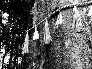 Serie Japan'10-11: Sacred tree I by Sonia A. Alzola