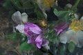 Spirit mauve pink by Brandan