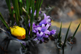 Of the Mallow to the Yellow by Brandan