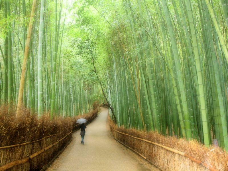 Serie Japan / Autumm'09: Arashiyama by Sonia A. Alzola