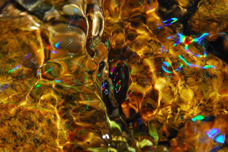 Flight of colors by Brandan