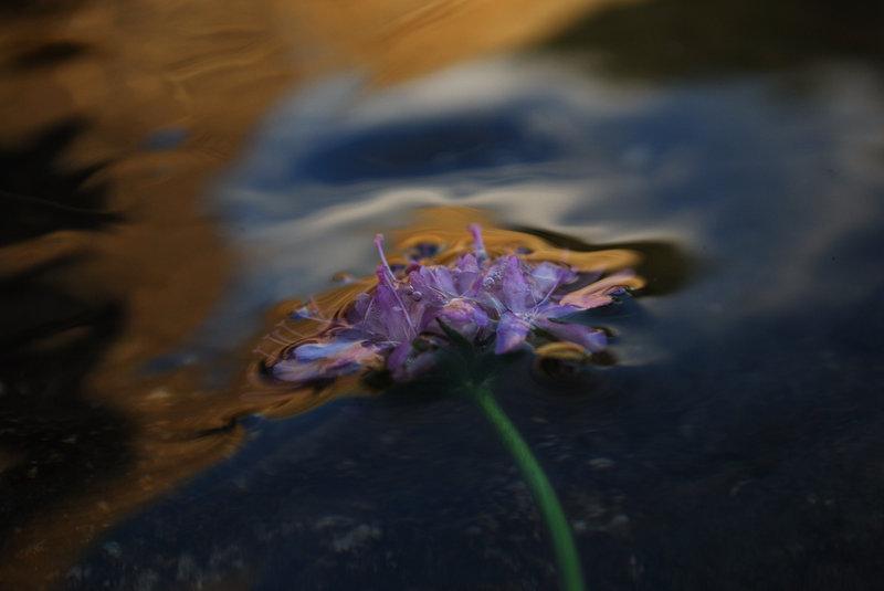 Threshold in flower II by Brandan