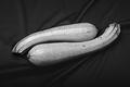 Zucchini's Love by Tiziano Micci