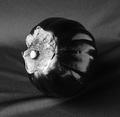 Eggplant Back by Tiziano Micci