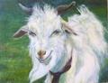 Funny goat by Sylva Zalmanson